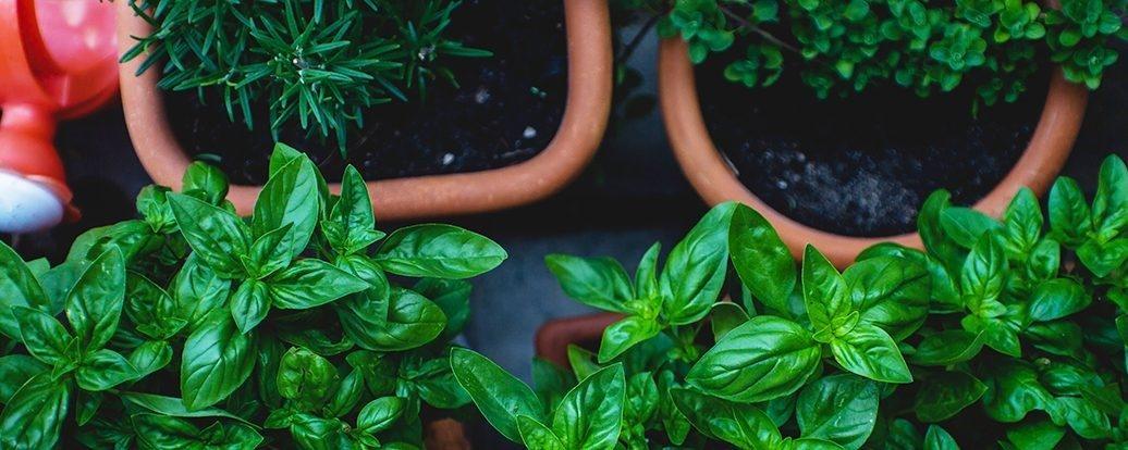 Zdrowe zioła nabalkon